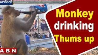 Exclusive Visuals | Monkey drinking Thums up | Krishna Pushkaralu | Telangana
