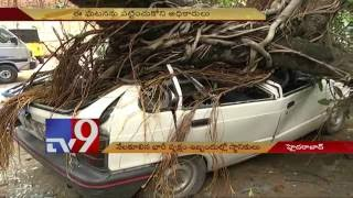 Heavy rain uproots ancient tree, damages car – TV9. Photo,Image,Pics