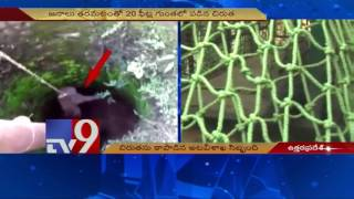 Cheetah slips into pit,rescued by forest officials in Uttar Pradesh – TV9