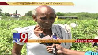 Cotton farmers seek govt help due to low farm yield – TV9