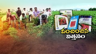 Farmer Huge Crop Loss Due to Fake Seeds in Both Telugu States || Special Focus || NTV
