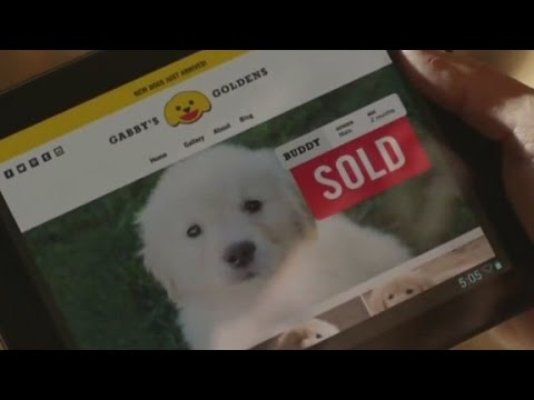 This GoDaddy Super Bowl ad outraged animal activists